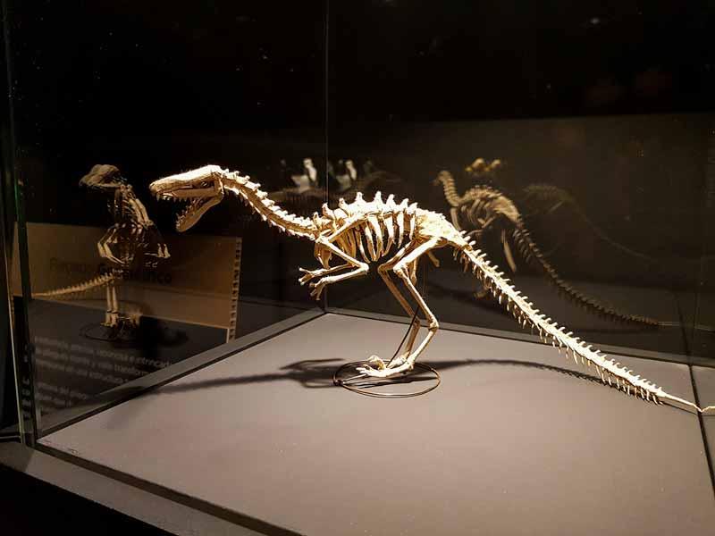 Dinosaurio de papel - Museo del Origmi de Zaragoza