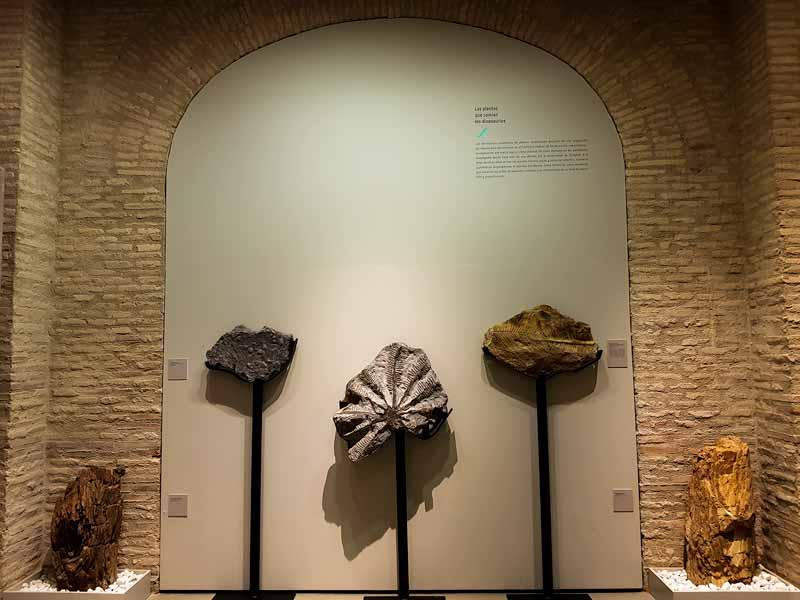 Fósiles de plantas.