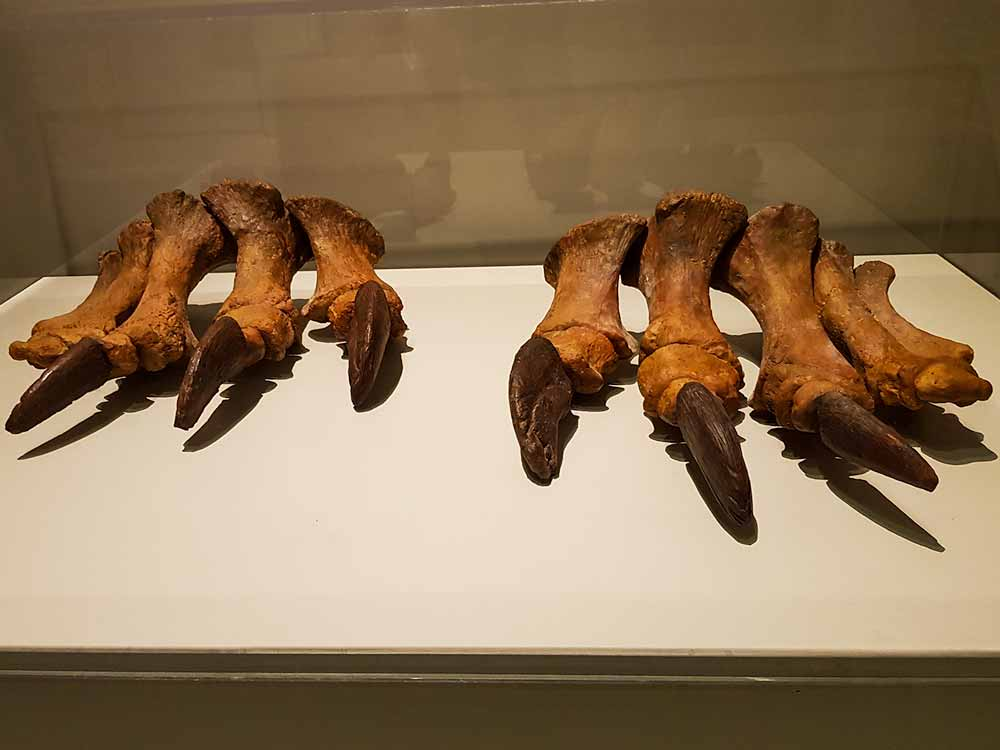 Patas de Tastavinsaurus Sanzi
