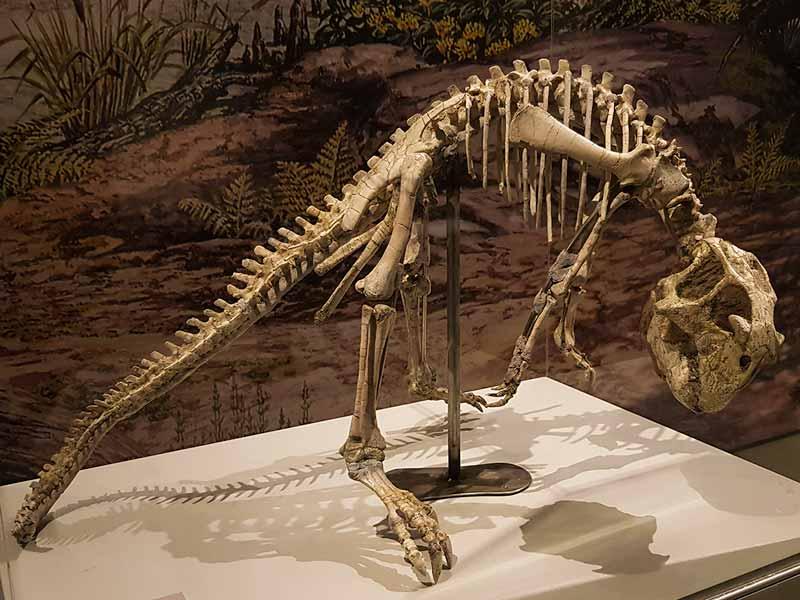 Esqueleto de Psittacosaurus