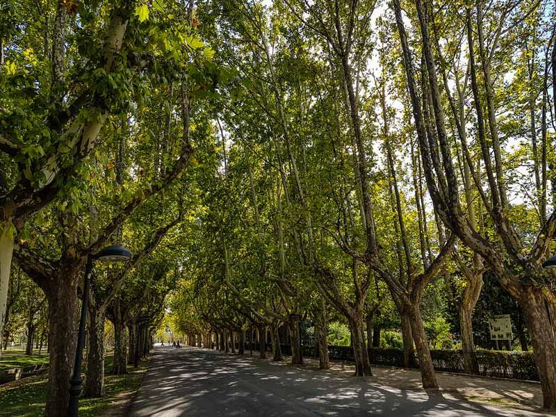 Avenida Bearneses del parque grande Labordeta de Zaragoza