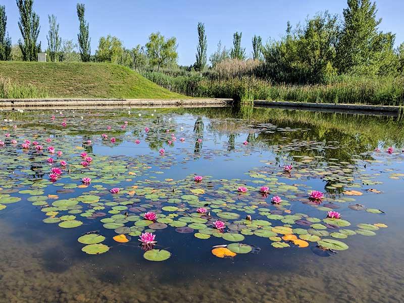 Jardín Acuático - Parque del Agua - Zaragoza